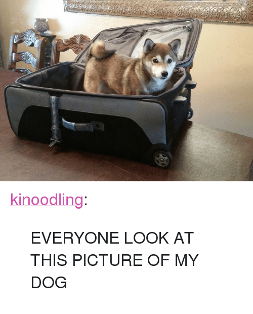 """Target, Tumblr, and Blog: <p><a class=""""tumblr_blog"""" href=""""http://kinoodling.tumblr.com/post/102703758956/everyone-look-at-this-picture-of-my-dog"""" target=""""_blank"""">kinoodling</a>:</p> <blockquote> <p>EVERYONE LOOK AT THIS PICTURE OF MY DOG</p> </blockquote>"""