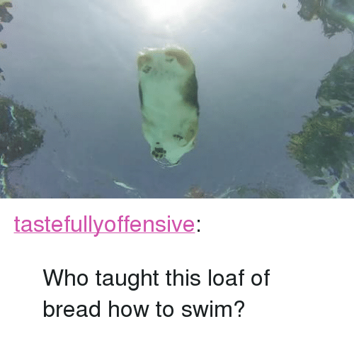 """Tumblr, Blog, and How To: <p><a href=""""http://tumblr.tastefullyoffensive.com/post/163223125938/who-taught-this-loaf-of-bread-how-to-swim"""" class=""""tumblr_blog"""">tastefullyoffensive</a>:</p> <blockquote><p>Who taught this loaf of bread how to swim?</p></blockquote>"""