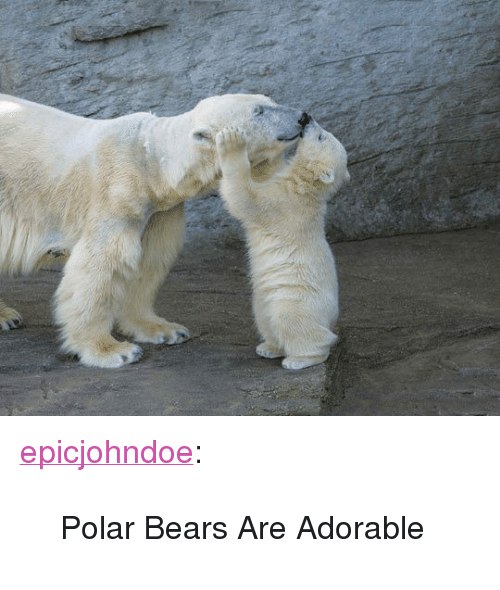 "Tumblr, Bears, and Blog: <p><a href=""https://epicjohndoe.tumblr.com/post/172461404242/polar-bears-are-adorable"" class=""tumblr_blog"">epicjohndoe</a>:</p>  <blockquote><p>Polar Bears Are Adorable</p></blockquote>"