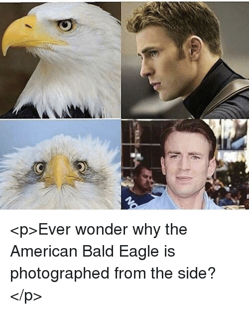 P Ever Wonder Why The American Bald Eagle Is Photographed From The