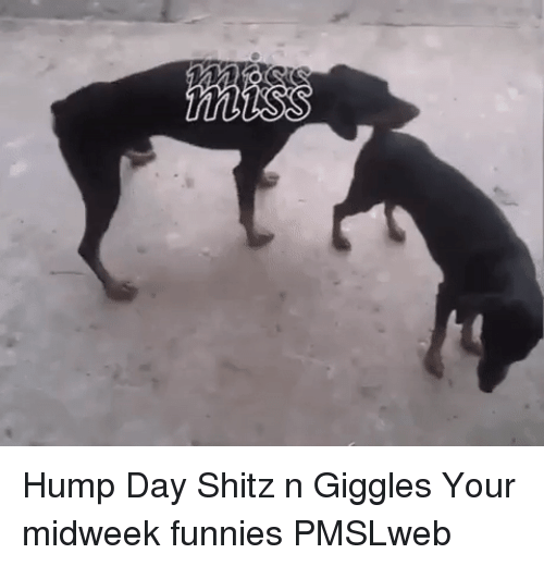 Hump Day, Day, and Giggles: <p>Hump Day Shitz n Giggles  Your midweek funnies  PMSLweb </p>