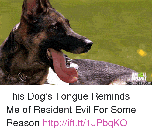 Pthis Dogrsquos Tongue Reminds Me Of Resident Evil For Some Reason