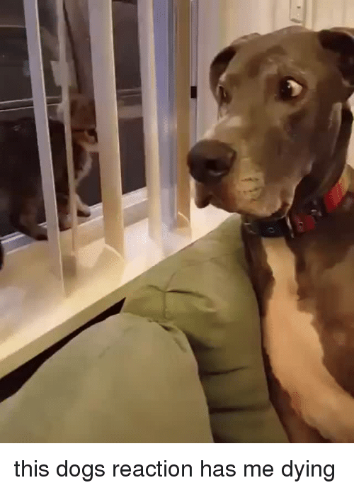 Dogs, This, and Dying: <p>this dogs reaction has me dying<br/></p>
