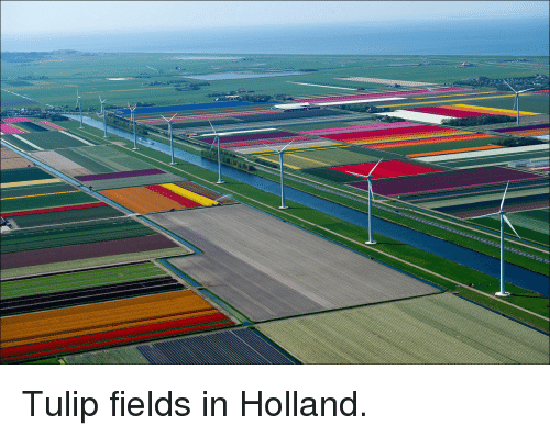 Holland, Tulip, and Fields: <p>Tulip fields in Holland.</p>