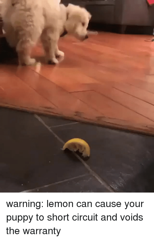 Puppy, Lemon, and Can: <p>warning: lemon can cause your puppy to short circuit and voids the warranty<br/></p>