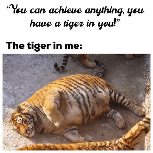 """Tiger, Can, and You: ·You can achieve anything, you  haue a tiqez in you!""""  05  The tiger in me:"""
