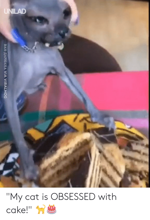 "Dank, Cake, and 🤖: ВАН ДАРИАНА VIA VIRALHOG ""My cat is OBSESSED with cake!"" 🐈🎂"