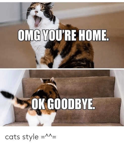Omgyou Re Home Ok Goodbye Cats Style Cats Meme On Me Me