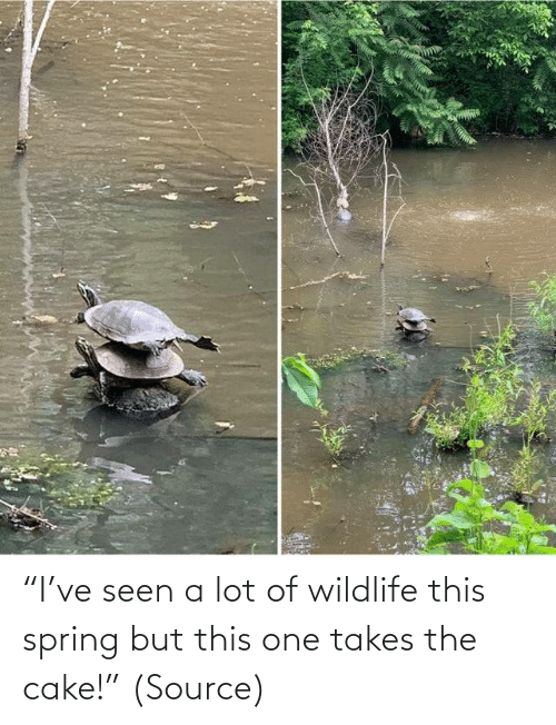 """Aww, Reddit, and Target: """"I've seen a lot of wildlife this spring but this one takes the cake!""""(Source)"""