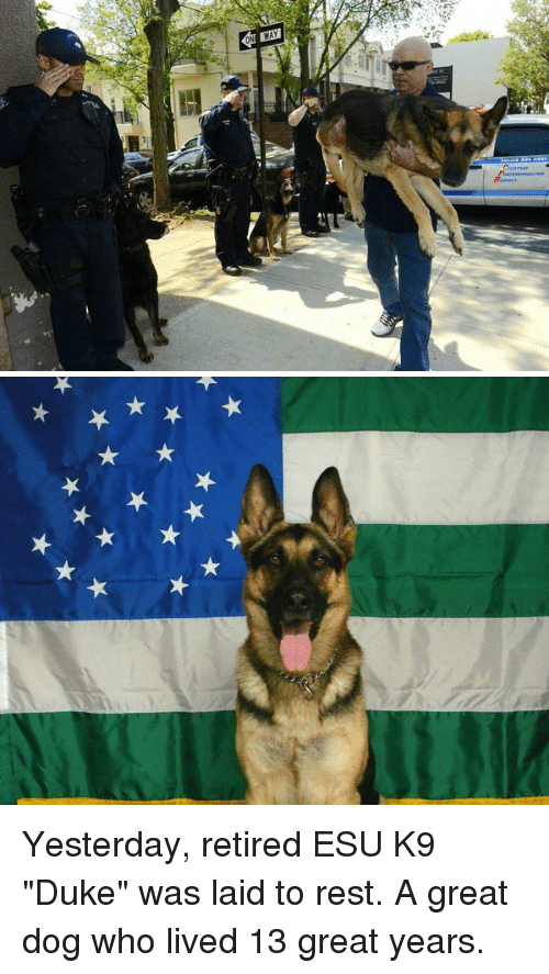 """Memes, Duke, and 🤖: ★X ★ Yesterday, retired ESU K9 """"Duke"""" was laid to rest. A great dog who lived 13 great years."""