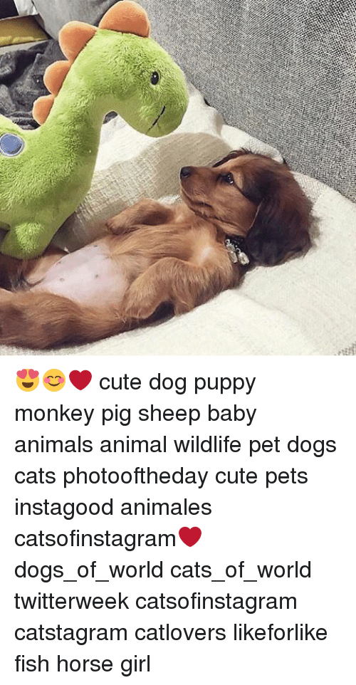 Cute Dog Puppy Monkey Pig Sheep Baby Animals Animal Wildlife Pet Dogs Cats Photooftheday Cute Pets Instagood Animales Catsofinstagram Dogs Of World Cats Of World Twitterweek Catsofinstagram Catstagram Catlovers Likeforlike Fish Horse Girl