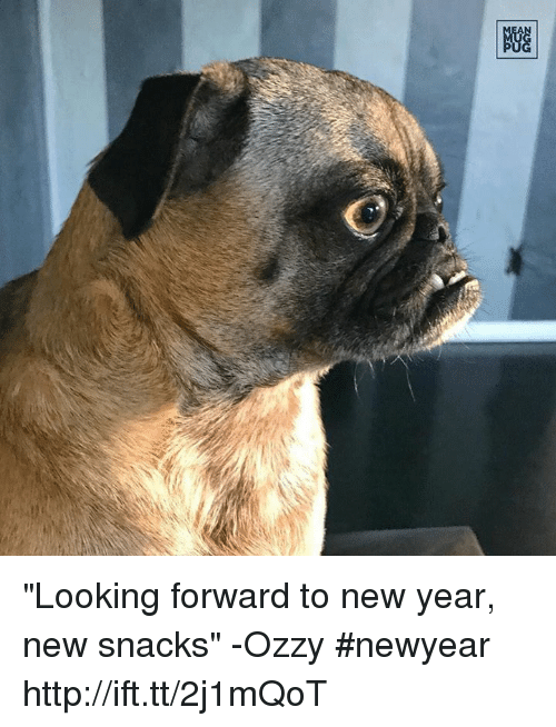 """Memes, 🤖, and Ozzy: 剷 """"Looking forward to new year, new snacks"""" -Ozzy #newyear http://ift.tt/2j1mQoT"""