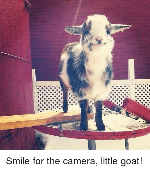 Memes, 🤖, and Goats: 参 Smile for the camera, little goat!