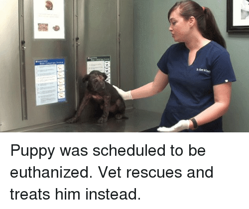 Funny, Plies, and Puppies: 図  plies whe Puppy was scheduled to be euthanized. Vet rescues and treats him instead.