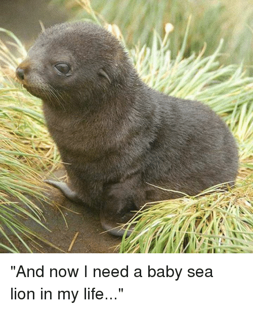 復 and now i need a baby sea lion in my life baby it s cold