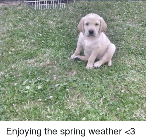 %E9%BB%92 enjoying the spring weather %3C3 6021769 ✅ 25 best memes about spring weather spring weather memes
