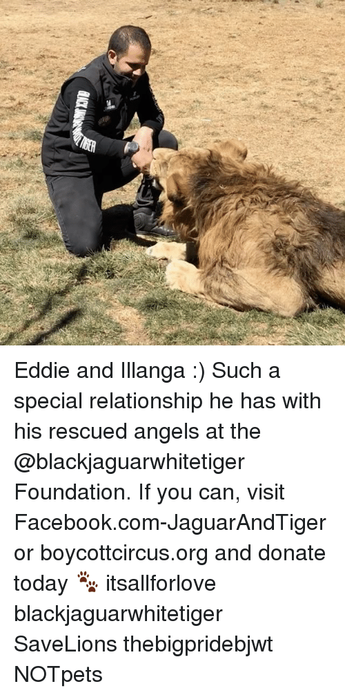 Facebook, Memes, and Angels: 를 Eddie and Illanga :) Such a special relationship he has with his rescued angels at the @blackjaguarwhitetiger Foundation. If you can, visit Facebook.com-JaguarAndTiger or boycottcircus.org and donate today 🐾 itsallforlove blackjaguarwhitetiger SaveLions thebigpridebjwt NOTpets