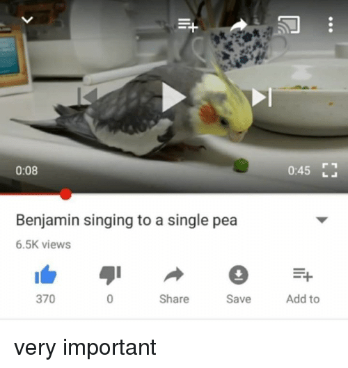 Singing, Single, and Add: 0:08  0:45  Benjamin singing to a single pea  6.5K views  370  Share  Save  Add to very important