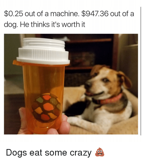Crazy, Memes, and 🤖: $0.25 out of a machine. $947.36 out of a  dog. He thinks it's worth it Dogs eat some crazy 💩