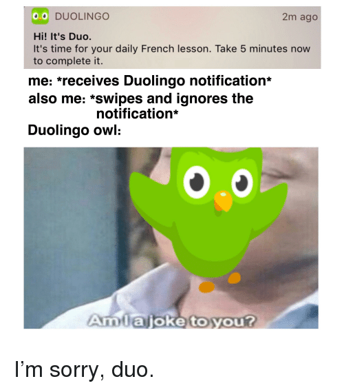 0 Duolingo 2m Ago Hi It S Duo It S Time For Your Daily French