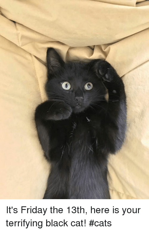 0 It's Friday the 13th Here Is Your Terrifying Black Cat