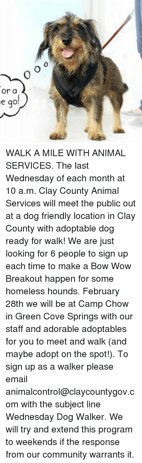 Community, Homeless, and Memes: 0  or a  e go WALK A MILE WITH ANIMAL SERVICES. The last Wednesday of each month at 10 a.m. Clay County Animal Services will meet the public out at a dog friendly location in Clay County with adoptable dog ready for walk!  We are just looking for 6 people to sign up each time to make a Bow Wow Breakout happen for some homeless hounds. February 28th we will be at Camp Chow in Green Cove Springs with our staff and adorable adoptables for you to meet and walk (and maybe adopt on the spot!). To sign up as a walker please email animalcontrol@claycountygov.com with the subject line Wednesday Dog Walker. We will try and extend this program to weekends if the response from our community warrants it.