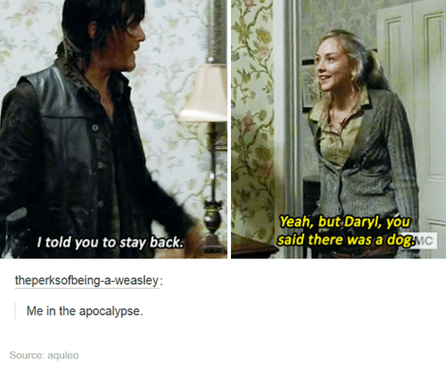 Yeah, Humans of Tumblr, and Back: 0  Yeah, but Daryl, you  said there was a dog.  l told you to stay back.  theperksofbeing-a-weasley  Me in the apocalypse.  Source: aquleo