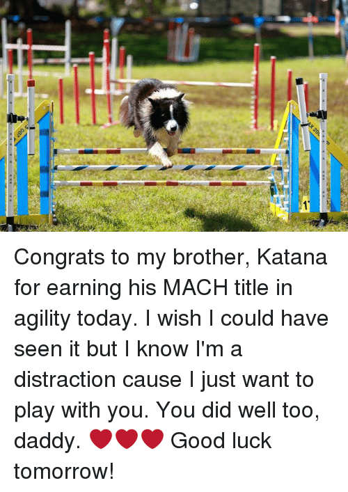 00> Congrats to My Brother Katana for Earning His MACH Title