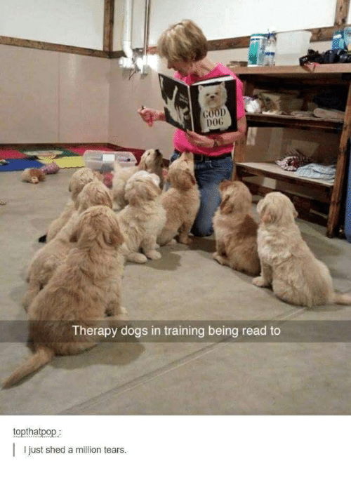 00D DOG Therapy Dogs in Training Being Read to Topthatpop I Just