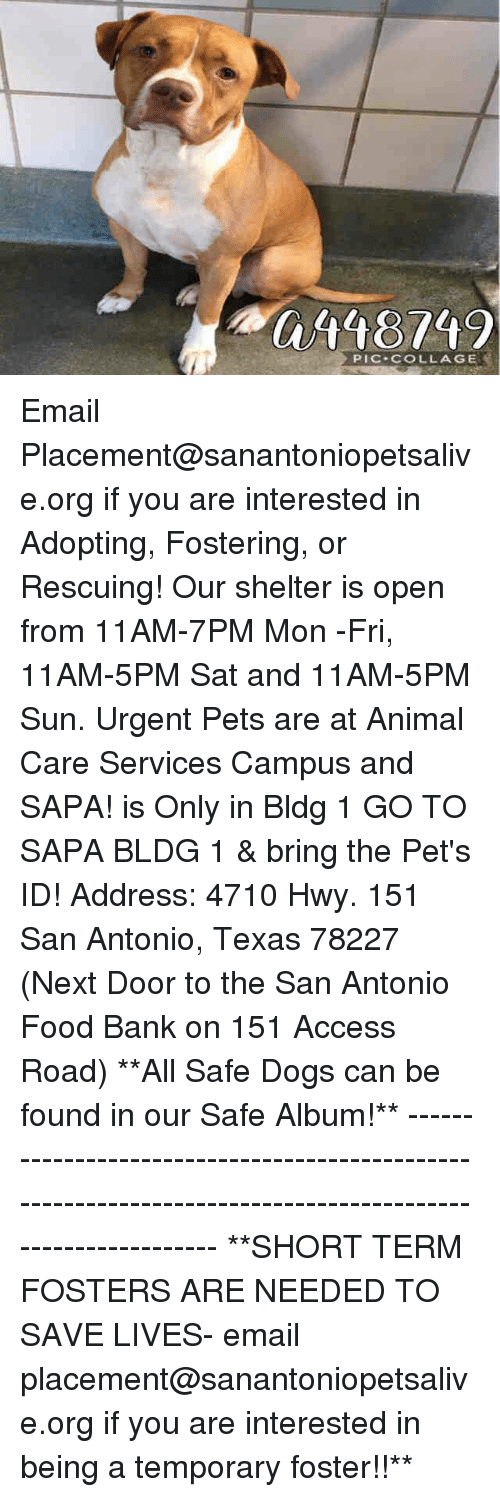 Dogs, Food, and Memes: 0118749  PIC COLLAGE Email Placement@sanantoniopetsalive.org if you are interested in Adopting, Fostering, or Rescuing!  Our shelter is open from 11AM-7PM Mon -Fri, 11AM-5PM Sat and 11AM-5PM Sun.  Urgent Pets are at Animal Care Services Campus and SAPA! is Only in Bldg 1 GO TO SAPA BLDG 1 & bring the Pet's ID! Address: 4710 Hwy. 151 San Antonio, Texas 78227 (Next Door to the San Antonio Food Bank on 151 Access Road)  **All Safe Dogs can be found in our Safe Album!** ---------------------------------------------------------------------------------------------------------- **SHORT TERM FOSTERS ARE NEEDED TO SAVE LIVES- email placement@sanantoniopetsalive.org if you are interested in being a temporary foster!!**