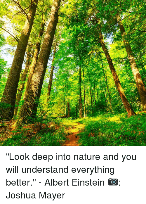 02 Look Deep Into Nature And You Will Understand Everything Better