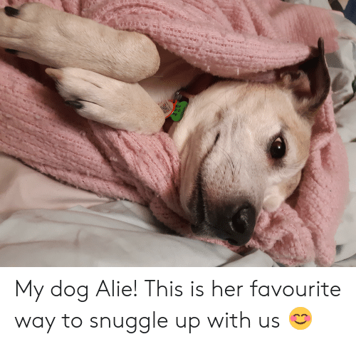 Her, Dog, and Rabies: 020  D.O.  Rabies Tag My dog Alie! This is her favourite way to snuggle up with us 😊