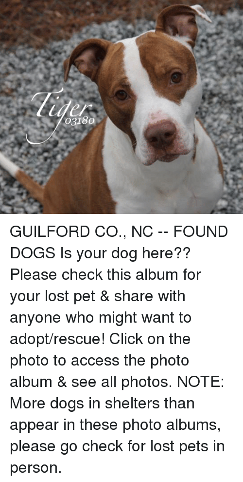 117aa100e231 03180 GUILFORD CO NC -- FOUND DOGS Is Your Dog Here   Please Check ...