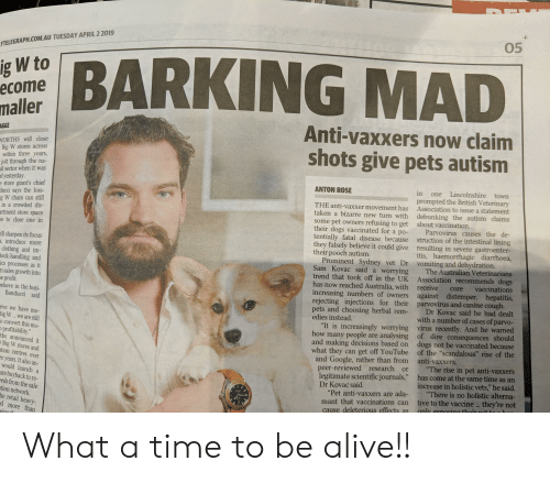 "Alive, Dogs, and Funny: 05  YTELEGRAPH.COM.AU TUESDAY APRIL 2 2019  url BARKING MAD  W to  ecome  malle  Anti-vaxxers now claim  shots give pets autism  AGGE  WORTHS will close  Big W stores across  within three years,  jolt through the na-  il sector when it was  d yesterday  ANTON ROSE  in one Lincolnshire towrn  e store giant's chief  ducci says the loss-  g W chain can still  in a crowded dis-  artment store space  es to close one in  prompted the British Veterinary  THE anti-vaxxer movement has Association to issue a statement  taken a bizarre new turn with debunking the autism claims  some pet owners refusing to get  their dogs vaccinated for a po-  tentially fatal disease because  they falsely believe it could give  their pooch autism.  about vaccination.  Parvovirus causes the de-  struction of the intestinal lining  resulting in severe gastroenter-  itis, haemorrhagic diarrhoea,  l sharpen its focus  s, introduce more  clothing and im-  tock-handling and  cs processes as it  m sales growth into  Prominent Sydney vet Dr vomiting and dehydration.  Sam Kovac said a worrying The Australian Veterinarians  trend that took off in the UK Association recommends dogs  has now reached Australia, with receive core vaccinations  increasing numbers of owners against distemper, hepatitis,  e profit  elieve in the busi-  Banducci said  ing injections for their parvovirus and canine cough.  reject  Dr Kovac said he had dealt  with a number of cases of parvo-  ""It is increasingly worrying virus recently. And he warned  of dire consequences should  dogs not be vaccinated because  of the ""scandalous"" rise of the  pets and choosing herbal rem-  edies instead.  eve we have mo-  igW.. we are still  o convert this mo  how many people are analysing  and making decisions based on  what they can get off YouTube  and Google, rather than from  profitability  ths announced it  Big W stores and  tion centres over  e years. It also an-  anti-vaxxers,  or""The rise in pet anti-vaxxers  has come at the same time as an  ewed  research  legitimate scientific journals,""  increase in holistic vets,"" he said.  ""Pet anti-vaxxers are ada-""There is no holistic alterna-  mant that vaccinations can tive to the vaccine they're not  would launch a  Dr Kovac said.  are buyback to re-  eds from the sale  tion network.  cause deleterious effects as onlv eosing thois pot t  he retail heavy-  d more than What a time to be alive!!"