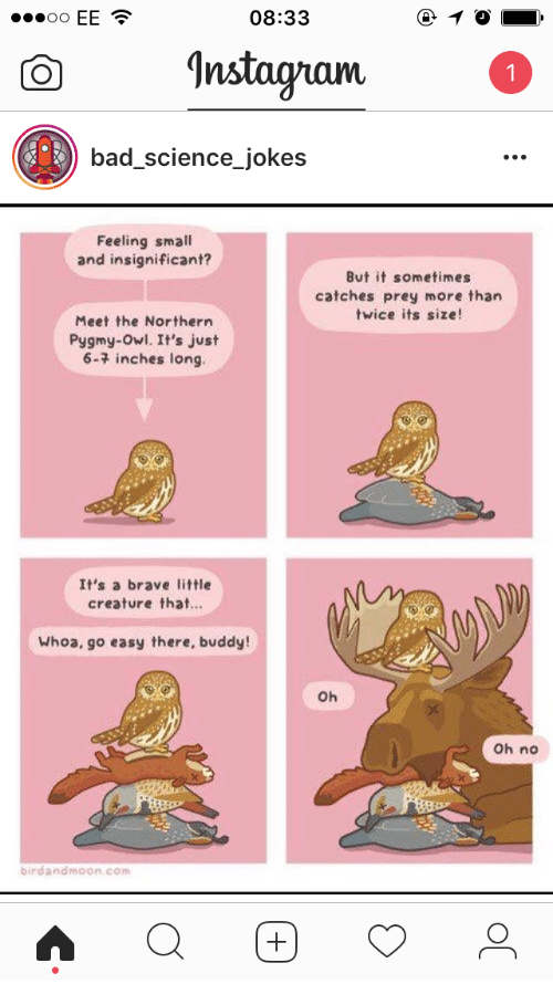 Bad, Brave, and Jokes: 08:33  EE  OO  Instaguam  bad science jokes  Feeling small  and insignificant?  But it sometimes  catches prey more than  twice its size  Meet the Northern  Pygmy-owl. It's just  6-7 inches long.  It's a brave little  creature that  Whoa, go easy there, buddy!  Oh  Oh no  birdandrnoon com