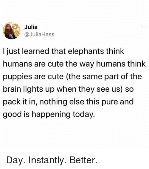 Cute, Memes, and Puppies: 08  l just learned that elephants think  humans are cute the way humans think  puppies are cute (the same part of the  brain lights up when they see us) so  pack it in, nothing else this pure and  good is happening today  Julia  @JuliaHass Day. Instantly. Better.