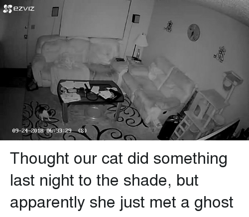 Apparently, Funny, and Shade: 09-24-2018 06 33:29 (S) Thought our cat did something last night to the shade, but apparently she just met a ghost