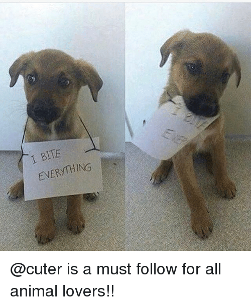 Memes, Animal, and 🤖: 1 BITE  EVERYTHING @cuter is a must follow for all animal lovers!!