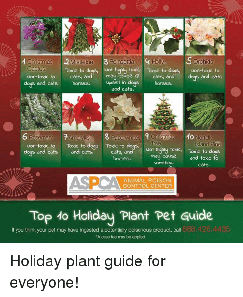 memes and poison 1 christmas 2 mistetoe 3poinsettia 4 holy orchids cactus - Are Christmas Cactus Poisonous To Dogs