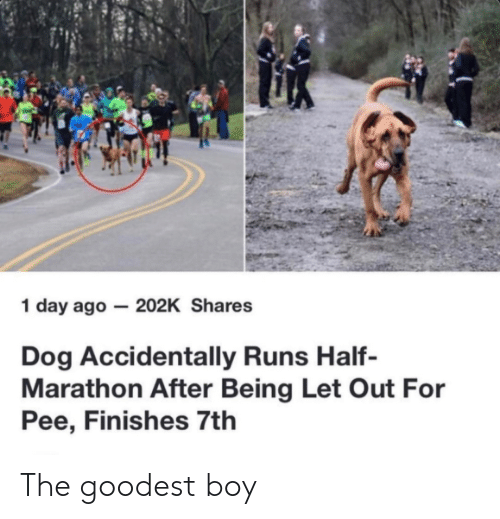 Boy, Dog, and Marathon: 1 day ago- 202K Shares  Dog Accidentally Runs Half-  Marathon After Being Let Out For  Pee, Finishes 7tlh The goodest boy