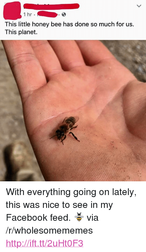 """Facebook, Http, and Nice: 1 hr  This little honey bee has done so much for us.  This planet. <p>With everything going on lately, this was nice to see in my Facebook feed. 🐝 via /r/wholesomememes <a href=""""http://ift.tt/2uHt0F3"""">http://ift.tt/2uHt0F3</a></p>"""
