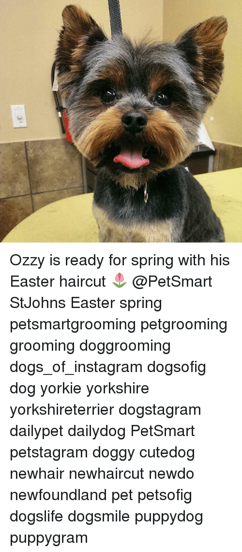 1 Ozzy Is Ready For Spring With His Easter Haircut Stjohns Easter