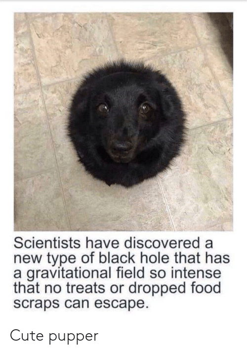Cute, Food, and Black: 1  Scientists have discovered a  new type of black hole that has  a gravitational field so intense  that no treats or dropped food  scraps can escape Cute pupper