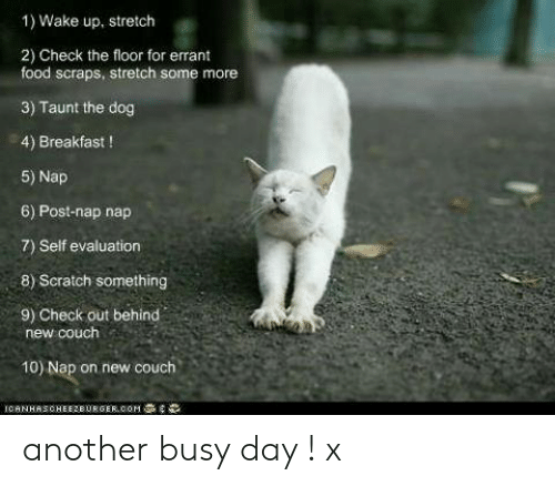 Food, Memes, and Some More: 1) Wake up, stretch  2) Check the floor for errant  food scraps, stretch some more  3) Taunt the dog  4) Breakfast !  5) Nap  6) Post-nap nap  7) Self evaluation  8) Scratch something  9) Check out behind  new couch  10) Nap on new couch another busy day  !  x