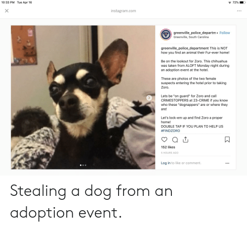 "Chihuahua, Crime, and Instagram: 10:33 PM Tue Apr 16  72%  instagram.com  greenville_police_departm. Follow  Greenville, South Carolina  greenville_police_department This is NOT  how you find an animal their Fur-ever home!  Be on the lookout for Zoro. This chihuahua  was taken from ALOFT Monday night during  an adoption event at the hotel.  These are photos of the two female  suspects entering the hotel prior to taking  Zoro.  Lets be ""on guard"" for Zoro and call  CRIMESTOPPERS at 23-CRIME if you know  who these ""dognappers"" are or where they  are!  Let's lock-em up and find Zoro a proper  home!  DOUBLE TAP IF YOU PLAN TO HELP US  #FINDZORO  152 likes  5 HOURS AGO  Log in to like or comment. Stealing a dog from an adoption event."