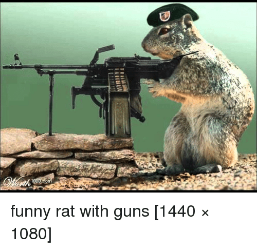 10 funny rat with guns 1440 1080 funny meme on me me - Pictures of funny animals with guns ...