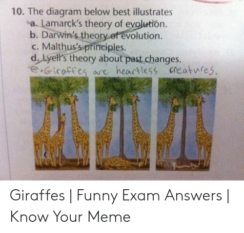 Funny, Meme, and Best: 10. The diagram below best illustrates  a. Lamarck's theory of evolution.  b. Darwin's theory of evolution.  c. Malthus's principles.  d. Lyell's theory about past changes.  e.Gicaffes are heartless creatwfes Giraffes | Funny Exam Answers | Know Your Meme
