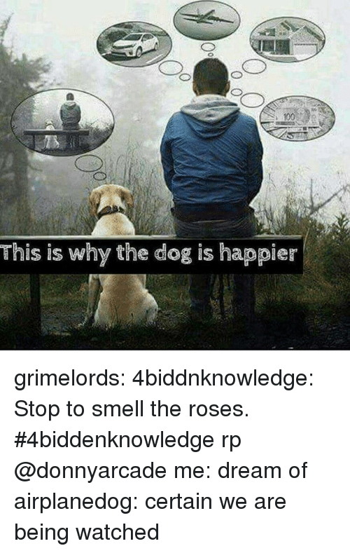Anaconda, Smell, and Tumblr: 100  This is why the dog is happier grimelords:  4biddnknowledge:  Stop to smell the roses. #4biddenknowledge rp @donnyarcade  me: dream of airplanedog: certain we are being watched