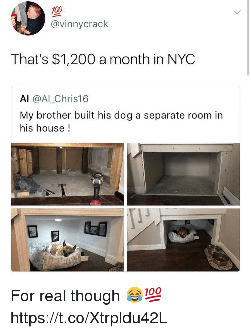 Anaconda, Bailey Jay, and Memes: 100  @vinnycrack  That's $1,200 a month in NYC  Al @AlLChris16  My brother built his dog a separate room in  his house! For real though 😂💯 https://t.co/Xtrpldu42L