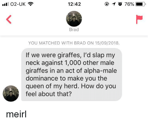 Queen, MeIRL, and How: '11  02-UK  12:42  76%  Brad  YOU MATCHED WITH BRAD ON 15/09/2018.  If we were giraffes, I'd slap my  neck against 1,000 other male  giraffes in an act of alpha-male  dominance to make you the  queen of my herd. How do you  feel about that? meirl